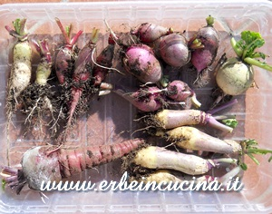 Radishes, carrots, swede