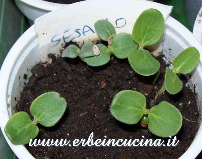 Piantine neonate / Newborn plants